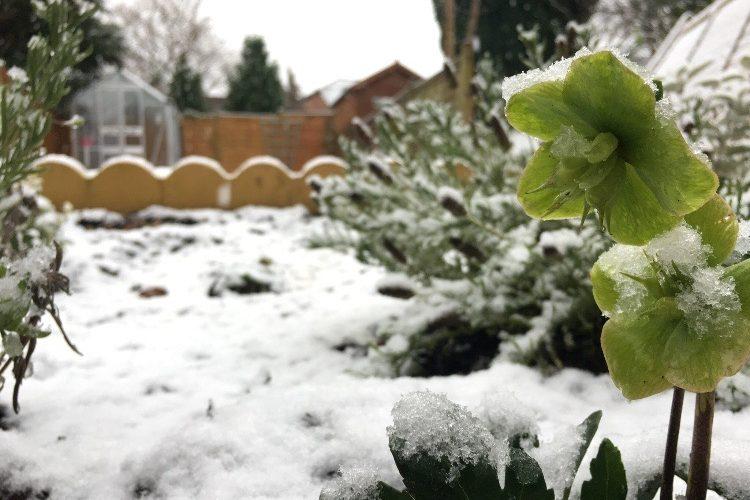 Snow is falling…